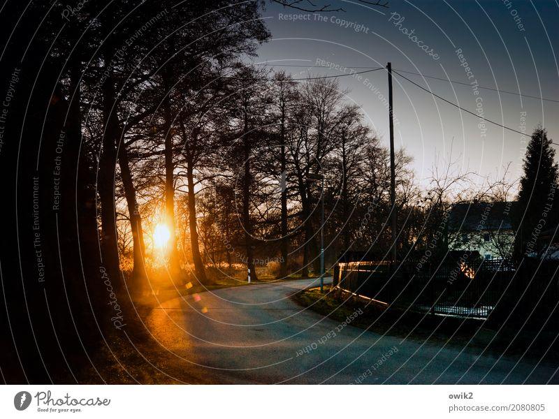 Hinter der Kurve Umwelt Landschaft Wolkenloser Himmel Winter Schönes Wetter Baum Sträucher Zweige u. Äste Dorf Gartenzaun Strommast Kabel Verkehrswege Straße