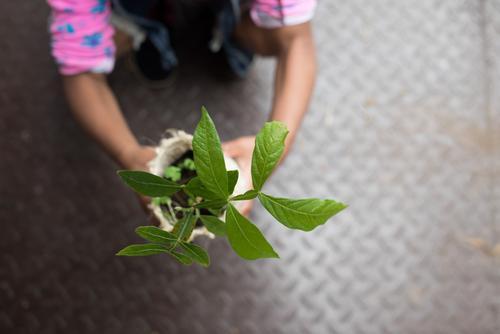 Mädchen hält kleine Pflanze Kind alt grün Garten Schule Zusammensein Freundschaft Wachstum Kraft Kindheit Erfolg lernen Geschenk Hoffnung