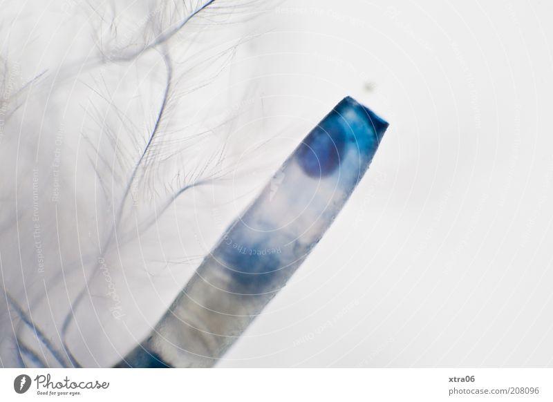 kunstfeder blau Feder Spitze zart Kunststoff fein Rest