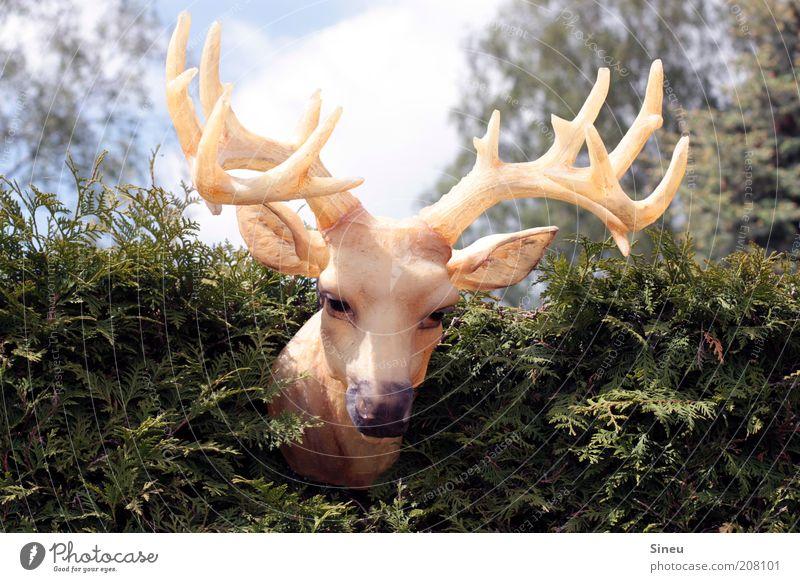 Rudi oder Ralph? Natur Himmel Sommer Tier lustig groß wild außergewöhnlich Statue Kunststoff hängen falsch Horn Hecke Hirsche