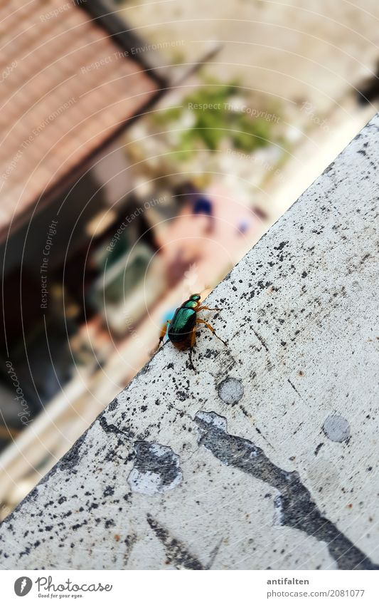 Aus der Sicht von Karl Natur Ferien & Urlaub & Reisen Sommer Landschaft Haus Tier Wand Frühling natürlich Beine Mauer Garten Tourismus Ausflug Aussicht Schönes Wetter