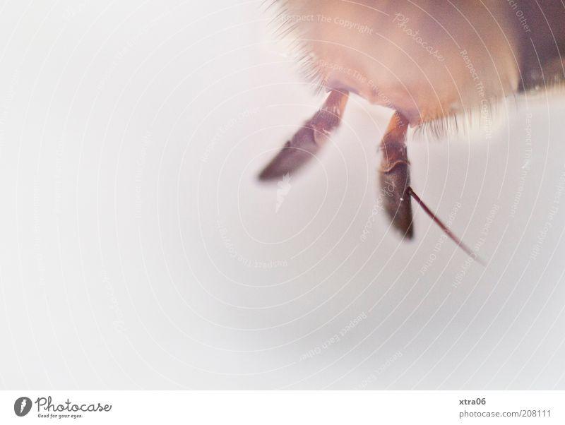 riechen weiß Tier Nase authentisch Insekt außergewöhnlich Fühler Textfreiraum links Makroaufnahme unerkannt unkenntlich