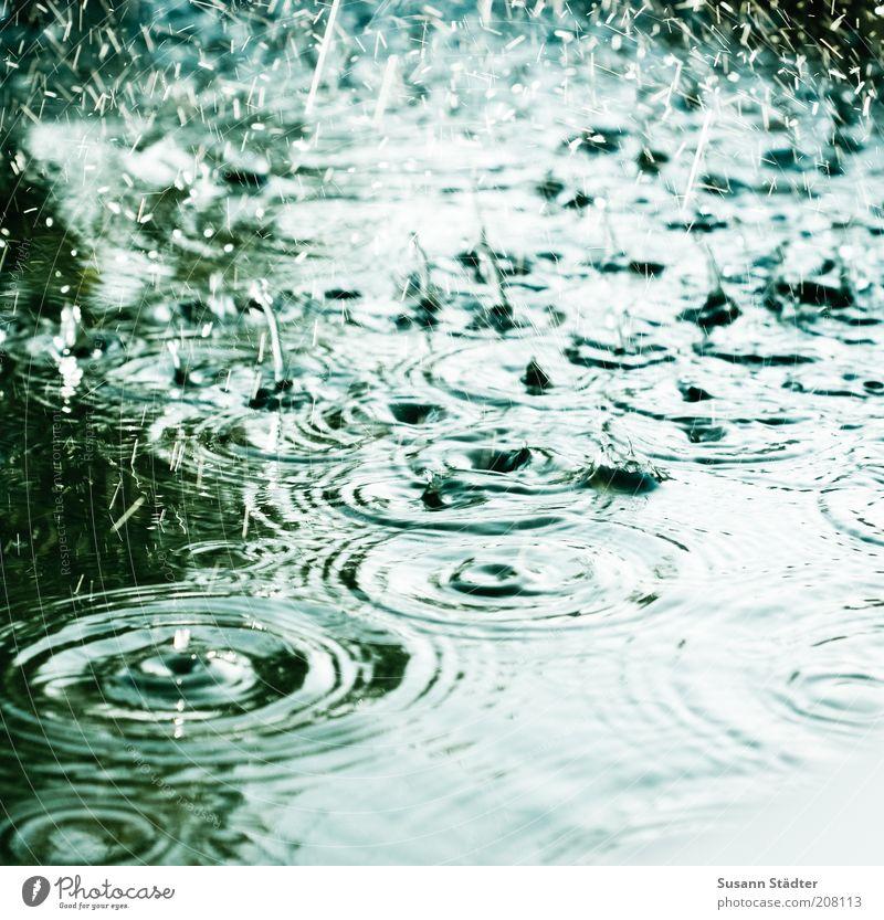 Der Geruch von Sommerregen Natur kalt Regen Wellen Wetter Wassertropfen nass Kreis Tropfen Klima Flüssigkeit stark Unwetter Klimawandel