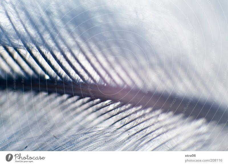 xtra mag federn :) Feder ästhetisch zart fein blau Unschärfe Retroring Farbfoto Nahaufnahme Detailaufnahme Makroaufnahme federartig grau Strukturen & Formen