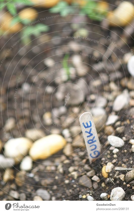 du wirst schon sehen.. Natur Pflanze Gefühle Garten Stein Stimmung warten Schilder & Markierungen Erde Wachstum Beet Optimismus Vorfreude Tatkraft steinig