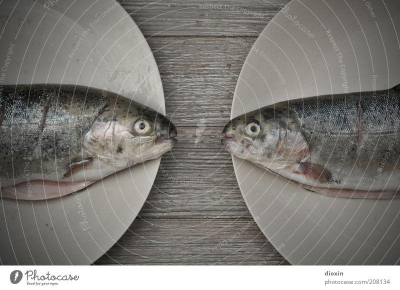 Die wollen uns grillen, Baby! Lebensmittel Fisch Forelle Ernährung Bioprodukte geschmackvoll Geschmackssache Protein Teller Tier Tiergesicht Schuppen 2 liegen