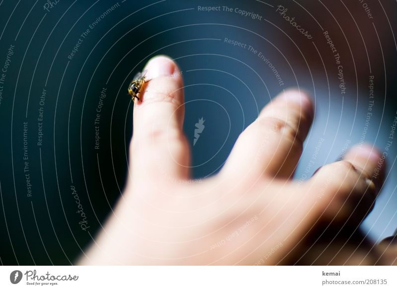 Klein und freundlich Mensch Hand Finger Tier Wildtier Insekt Schwebfliege Fliege 1 sitzen Vertrauen Sympathie Tierliebe Farbfoto Gedeckte Farben Innenaufnahme