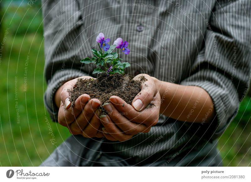 Junge Frau hällt Stiefmütterchen in ihrer Hand. Sommer Garten Kind Arbeit & Erwerbstätigkeit Gartenarbeit Landwirtschaft Forstwirtschaft feminin Jugendliche