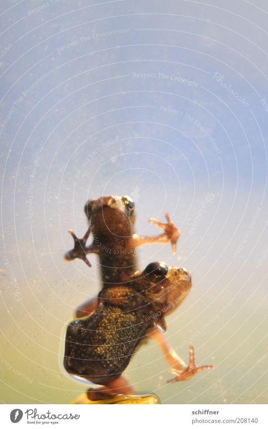 Guido & Angie Tier Freundschaft Zusammensein Tierpaar klein nass sitzen feucht Frosch Glätte Redewendung hocken gepunktet Frühlingsgefühle Froschlurche