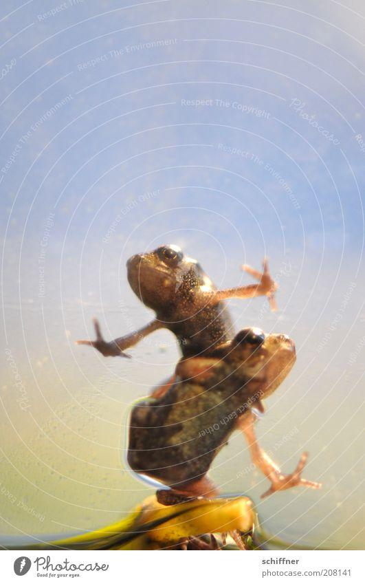 Guido & Angie Tier Freundschaft Zusammensein Tierpaar klein nass sitzen feucht Frosch Glätte hocken Frühlingsgefühle Makroaufnahme Redewendung aufeinander doppelt gemoppelt