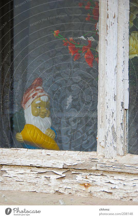 Karotte Pflanze Fenster Holz Glas alt Kitsch trashig trist Frieden Idylle Gartenzwerge Sprossenfenster lackiert Kunststoff Keramik Möhre Gardine Vorhang