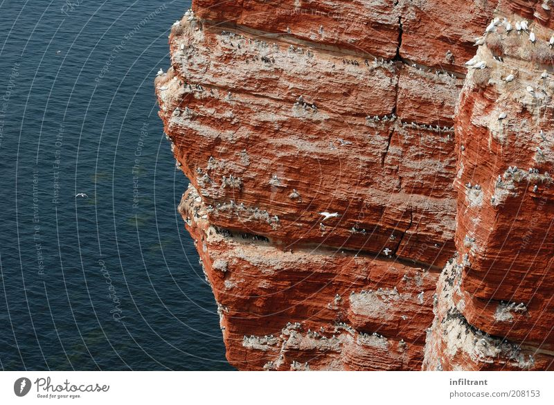 am roten Fels Wasser Sommer Schönes Wetter Felsen Nordsee Insel Vogel Tiergruppe Schwarm fliegen natürlich oben schön wild blau Leben Freiheit Natur Überleben