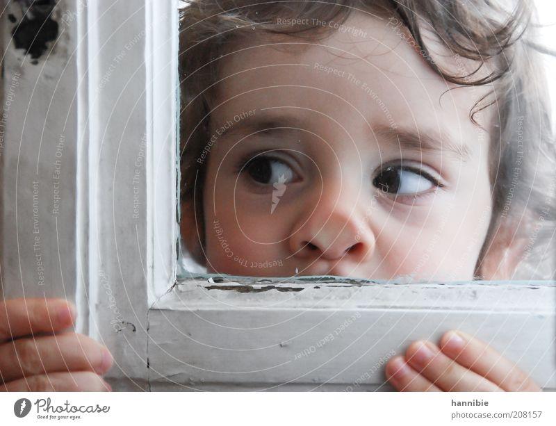 platt Mensch Kind weiß Gesicht Junge Nase Finger Fenster Neugier Kindheit Denken Fensterscheibe Interesse Blick Porträt
