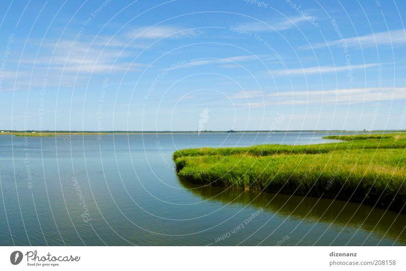 boddenzielles Urlaubsziel Natur Wasser schön Himmel grün blau Pflanze Sommer ruhig Wolken Ferne Gras Landschaft Küste nass groß