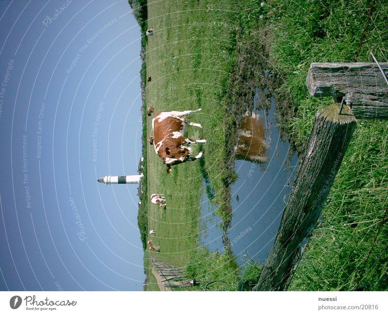 Leuchtturm Rote Kliff  Kampen/Sylt Europa Schifffahrt Seezeichen