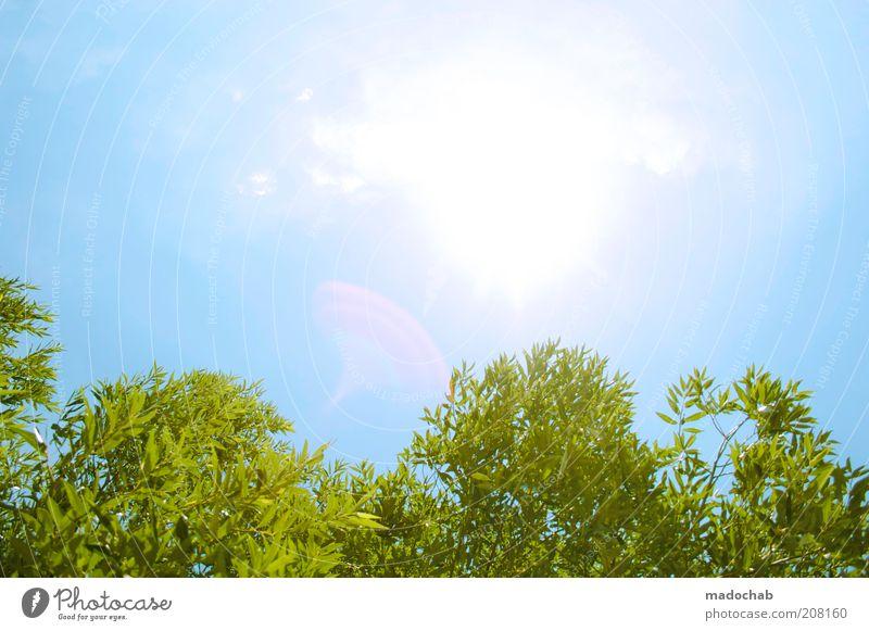 summertime Umwelt Natur Landschaft Pflanze Himmel Wolkenloser Himmel Sonne Frühling Sommer Klima Schönes Wetter Baum Sträucher Energie Freizeit & Hobby