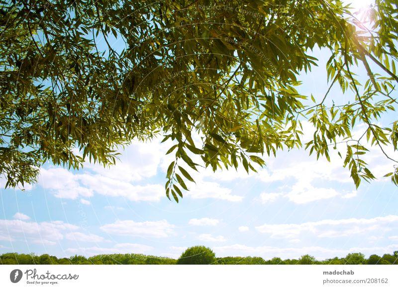 Rummelsburger Bucht Natur Baum Sonne Pflanze Sommer ruhig Blatt Wolken Gefühle oben Frühling Freiheit Park Wärme Landschaft Stimmung