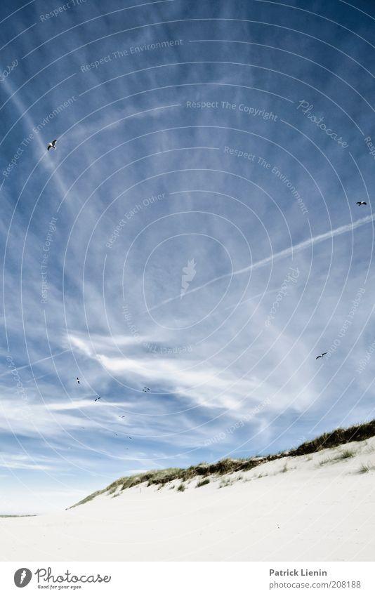 Lass uns leben! Natur Himmel weiß Meer blau Pflanze Sommer Strand Ferien & Urlaub & Reisen ruhig Wolken Tier Sand Landschaft Luft hell