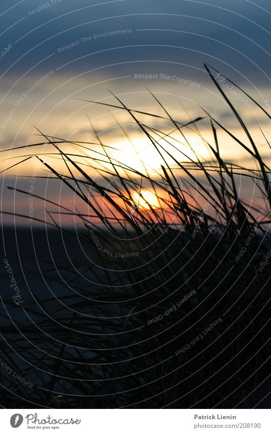 Lass uns lieben! Himmel Natur Sonne Pflanze Sommer Strand Ferien & Urlaub & Reisen Meer Wolken ruhig Landschaft Umwelt Luft Küste Wind Insel