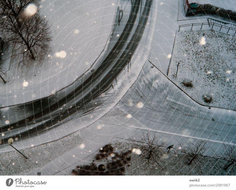Winterspiele Umwelt Landschaft Schönes Wetter Wind Eis Frost Schnee Schneefall Baum Gras Sträucher Straße Bürgersteig Straßenbeleuchtung Spuren Schneeflocke
