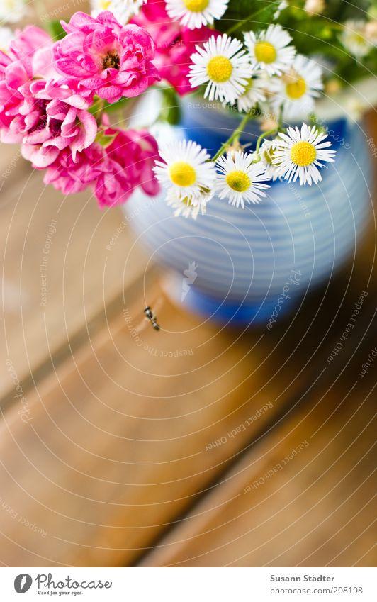 Gartenblumen für Ces Fliege Blühend Insekt bestäuben Schwebfliege Kamillenblüten Rose rosa Vase blau gestreift Holztisch Dekoration & Verzierung Pflanze Tisch