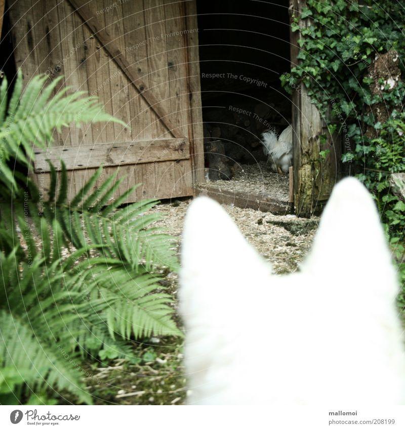 fastfood Hund weiß Tür offen Angst gefährlich bedrohlich beobachten Symbole & Metaphern Ohr Landwirtschaft fangen Jagd Appetit & Hunger verstecken Wachsamkeit