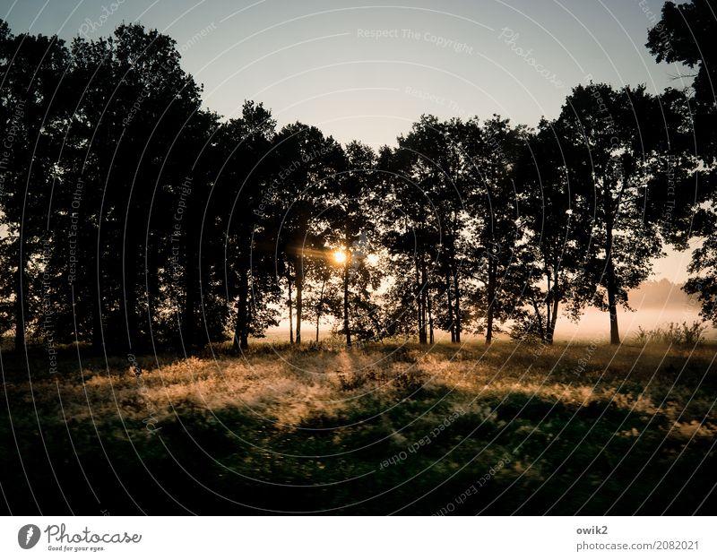 Sonne in den Wipfeln Umwelt Natur Landschaft Pflanze Wolkenloser Himmel Herbst Klima Schönes Wetter Baum Gras Sträucher Wiese Wald Waldrand Morgennebel leuchten