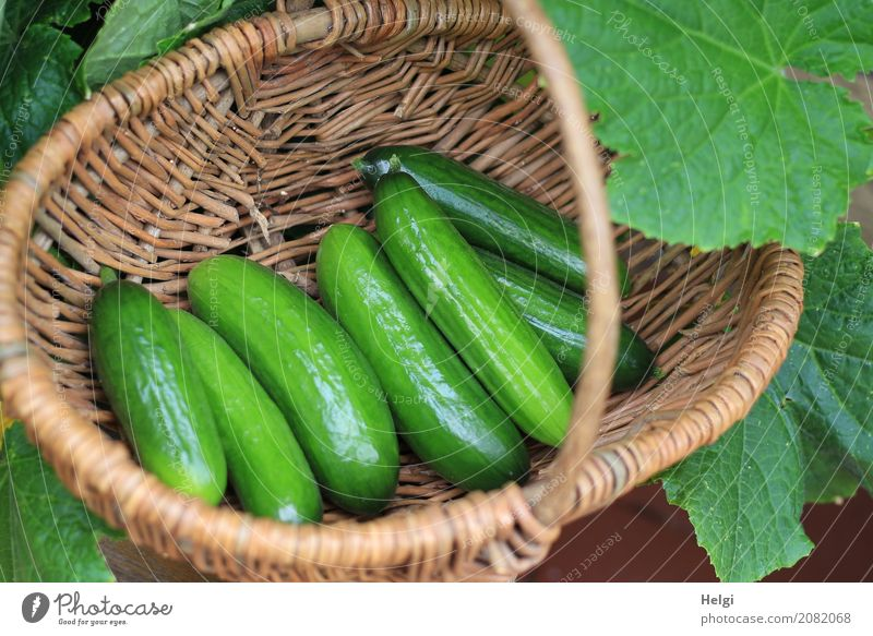leckere Minigurken Lebensmittel Gemüse Gurke Ernährung Bioprodukte Vegetarische Ernährung Pflanze Blatt Garten Korb Holz liegen Wachstum frisch Gesundheit