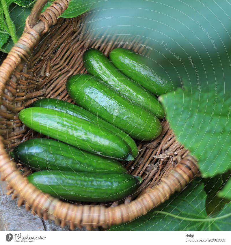 frisch geerntet Gemüse Gurke Ernährung Bioprodukte Vegetarische Ernährung Umwelt Natur Pflanze Blatt Nutzpflanze Garten Korb liegen authentisch Gesundheit