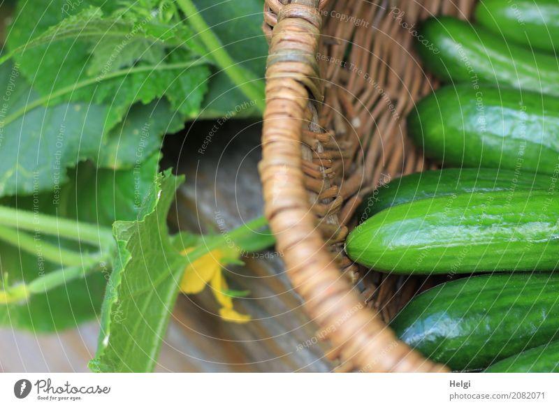 frisch und knackig Lebensmittel Gemüse Gurke Ernährung Bioprodukte Vegetarische Ernährung Umwelt Natur Pflanze Sommer Blatt Blüte Nutzpflanze Garten Korb