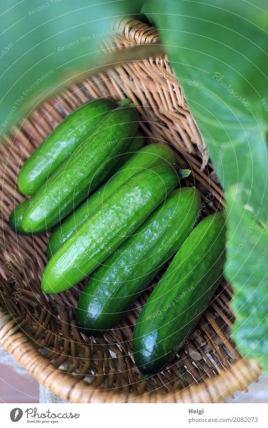 ein letztes ... Lebensmittel Gemüse Gurke Ernährung Bioprodukte Vegetarische Ernährung Natur Pflanze Blatt Garten Korb Holz liegen frisch Gesundheit lecker