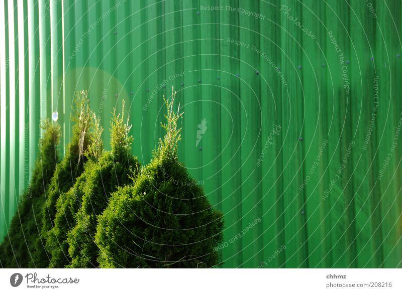 Quartett grün Pflanze Farbe Zusammensein Metall Sträucher 4 Reihe Ziffern & Zahlen Grünpflanze Gärtner Monochrom Zwerg Silo Zypresse Lebensbaum
