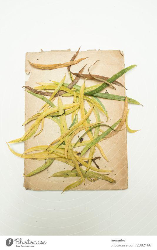 Herbarium Blätter herbarium blätter auf papier ein lizenzfreies stock foto