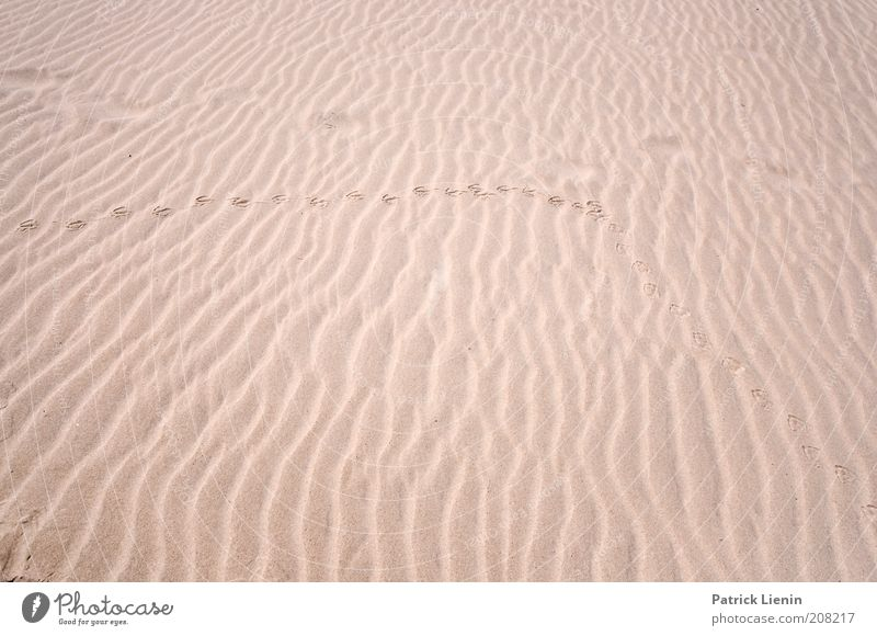 Spuren im Sand Natur Sommer Strand Umwelt Landschaft Küste Wind Erde Hintergrundbild Insel Klima Urelemente lang Fußspur