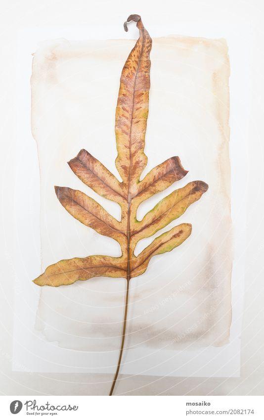 Herbarium Blätter herbarium loses blatt auf papier ein lizenzfreies stock foto