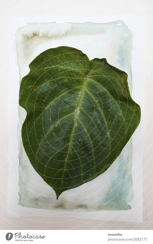 Herbarium. Granadillablatt auf Papierhintergrund Kunst Gemälde Natur Pflanze Blatt exotisch ästhetisch Zufriedenheit Design Botanik Wasserfarbe Aquarell Garten