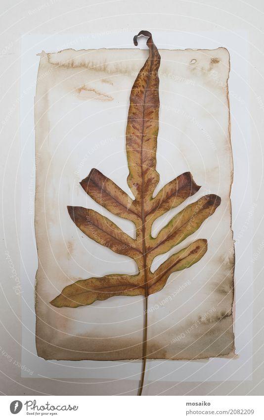 Herbarium. Brown-Blatt auf Papierhintergrund Kunst Gemälde Natur Pflanze exotisch ästhetisch Zufriedenheit Design Botanik Wasserfarbe Aquarell Garten grün