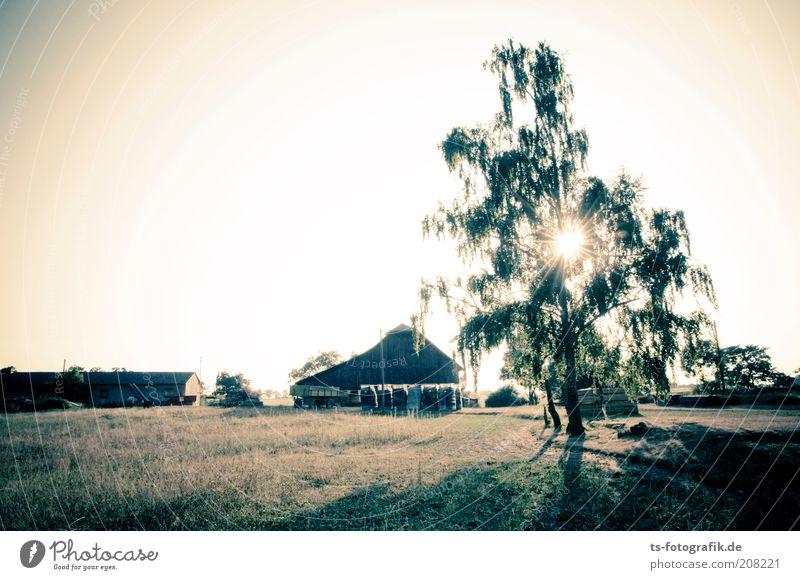 Rumpelstilzchens Tanzplatz Bauernhof Scheune Landwirtschaft Umwelt Natur Landschaft Himmel Wolkenloser Himmel Sonnenaufgang Sonnenuntergang Sonnenlicht Sommer