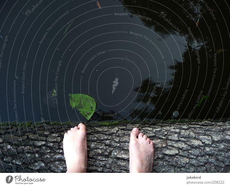Dirty Dancing oder Dreckiger Tümpel Fuß Zehen Wasser Baum Moos Seerosen Seerosenblatt Baumstamm Baumrinde Seeufer Teich Schwimmen & Baden stehen grün