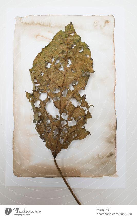 Herbarium. Altes Blatt auf Papierhintergrund Kunst Gemälde Natur Pflanze exotisch ästhetisch Zufriedenheit Design Botanik Wasserfarbe Aquarell Garten grün