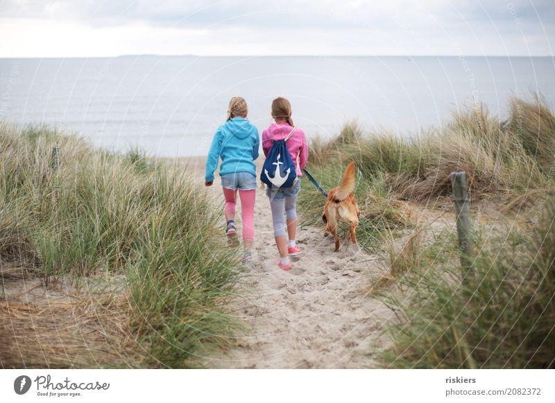 Strandspaziergang ii Mensch Kind Mädchen Geschwister Schwester Familie & Verwandtschaft Kindheit 2 Umwelt Natur Landschaft Ostsee Tier Haustier Hund 1 entdecken