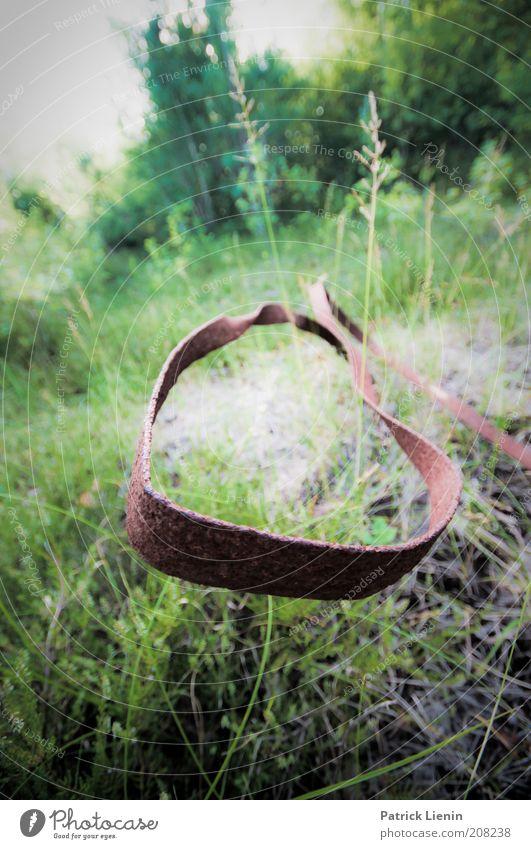 vergangen Umwelt Natur Landschaft Pflanze Urelemente Erde Luft Sommer Klima Klimawandel Gras alt neu Wachstum Ähren Wiese Spuren Gedeckte Farben Außenaufnahme