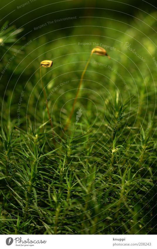 einmal Moos im Doppelpack Natur grün Pflanze Sommer ruhig gelb Wald Wiese Blüte Gras Frühling Park braun Zusammensein elegant Umwelt