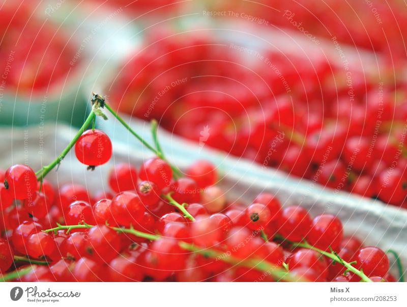 Johannis rot Pflanze Ernährung Lebensmittel klein Frucht frisch süß lecker verkaufen Zweig Beeren Bioprodukte sauer Vegetarische Ernährung Nutzpflanze