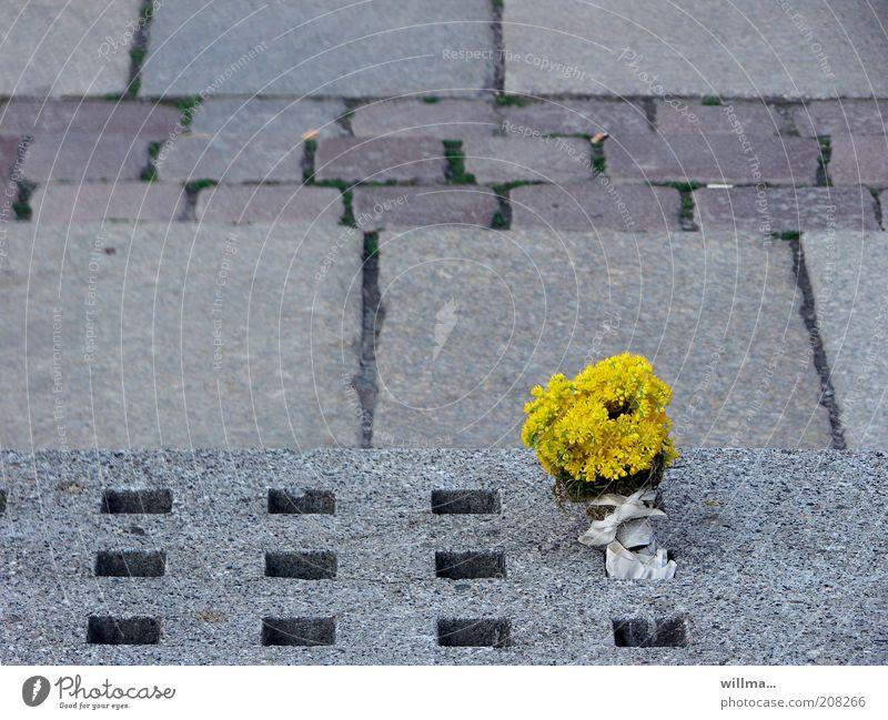 my favorite things Blume Einsamkeit gelb Leben grau Stein Platz trist einzigartig außergewöhnlich Vergänglichkeit Loch Blumenstrauß skurril verloren