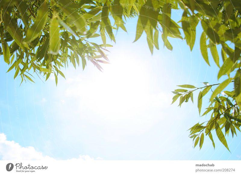 sonntag Natur Himmel Sonne Pflanze Sommer ruhig Erholung Gefühle Glück Wärme Landschaft Zufriedenheit Stimmung Umwelt Lifestyle Fröhlichkeit