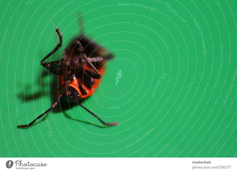 Sonntagmittagsschläfchen Natur alt Tier Tod Traurigkeit schlafen Trauer liegen Insekt Müdigkeit Sorge Käfer Makroaufnahme