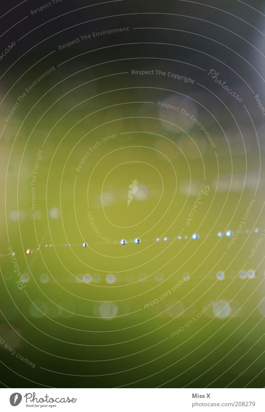 Perlenkette Natur Wasser Wassertropfen nass Spinnennetz Netz filigran Farbfoto Außenaufnahme Nahaufnahme Menschenleer Textfreiraum oben Textfreiraum unten