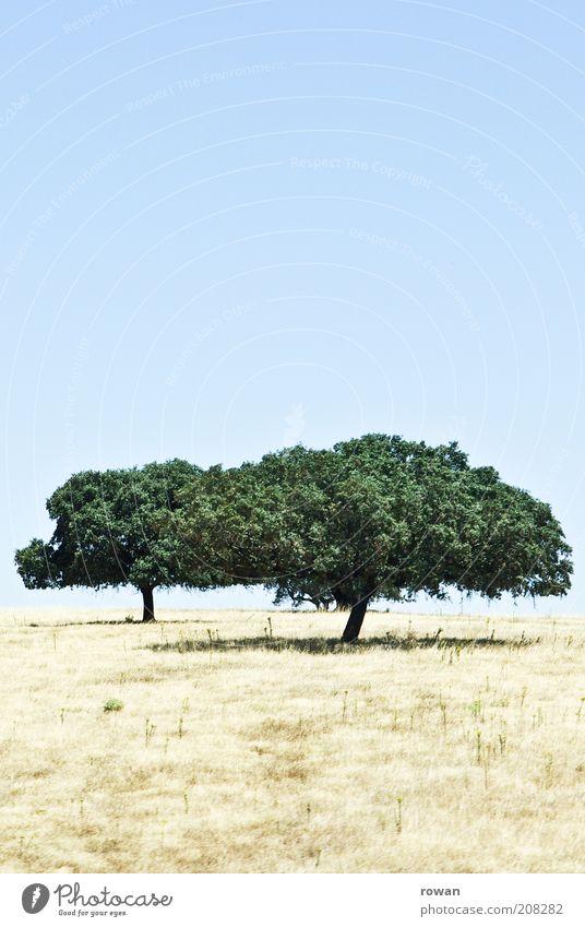 zwei Natur Landschaft Sommer Schönes Wetter Dürre Baum dehydrieren Wachstum trocken ruhig Wärme 2 heiß Farbfoto Außenaufnahme Menschenleer Textfreiraum oben
