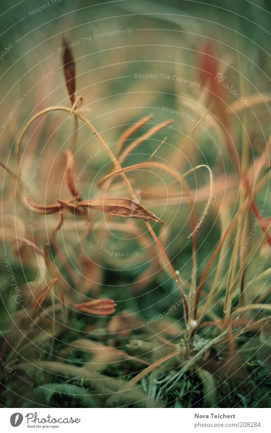 Bodenwelten Umwelt Natur Landschaft Pflanze Sommer Herbst Klima Blume Gras Sträucher Blüte Wildpflanze verblüht dehydrieren Wachstum alt ästhetisch nah